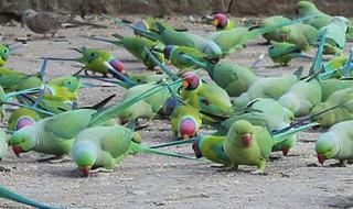 Birds 101: Introduction to Pet Birds