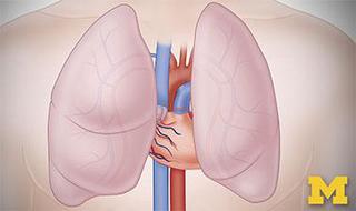 Anatomy: Cardiovascular, Urinary, and Respiratory Systems