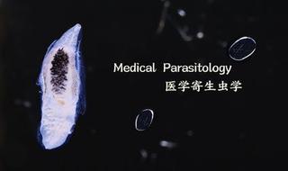 Medical Parasitology 医学寄生虫学
