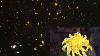 Life in the Universe: Syntheses for Life
