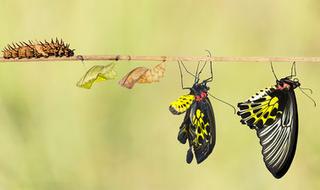 Introducción a la genética y la evolución