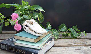 Effective Teaching Strategies for Biology