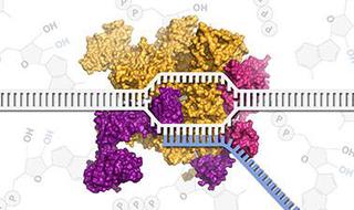 Molecular Biology - Part 2: Transcription and Transposition