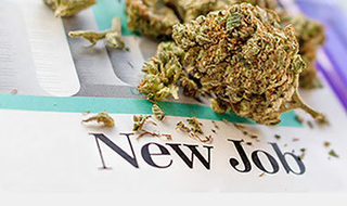 General Overview of Cannabis and the Industry's Outlook and Professions