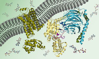 Biochemistry: Biomolecules, Methods, and Mechanisms