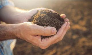 El suelo en el Sistema de Siembra Directa