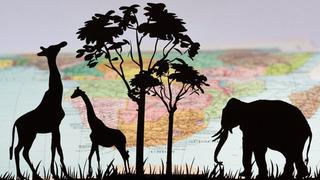 Evrim teorisi ve İslam