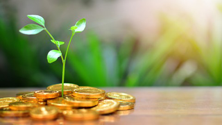 Buy Hard Too: Beginners' Guide to Mutual Funds