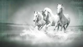 Equine Passive Streams